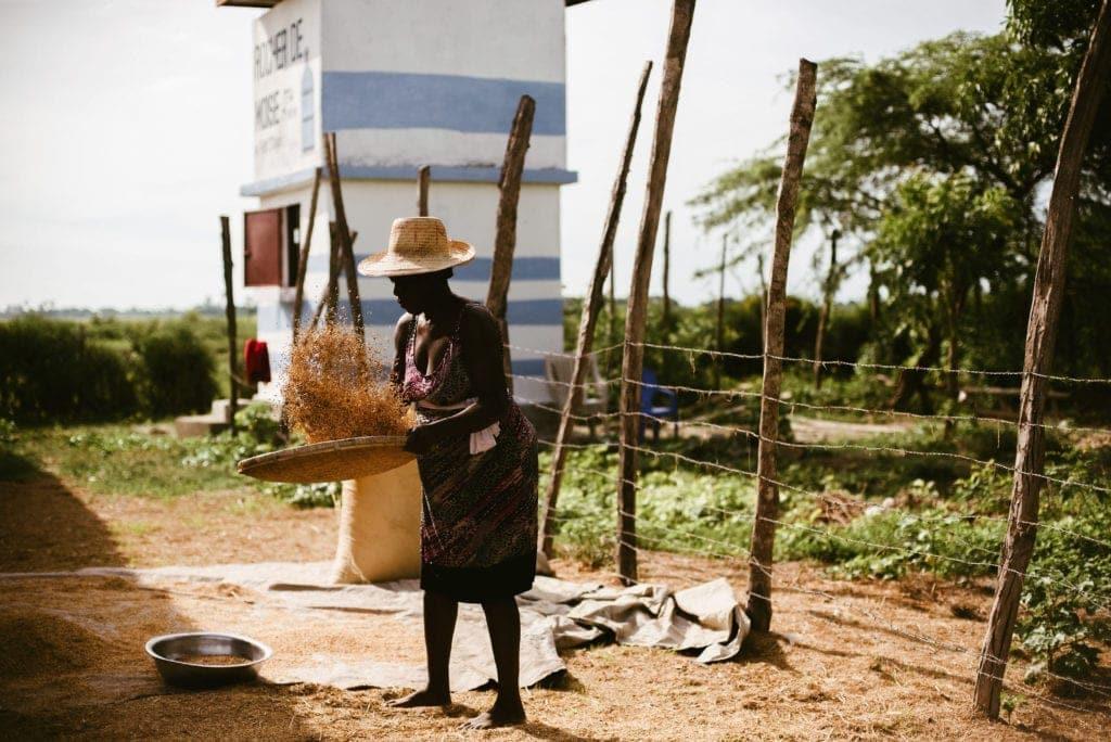 Tikaden Haiti | Rice Farming